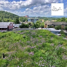 Blue Sky, Green Roof: Reimagining Asheville's Rooftops
