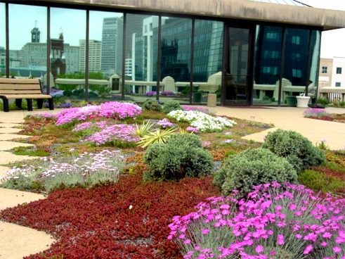 City of Atlanta Test Greenroof: Photo by Bill Brigham