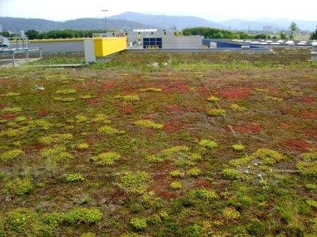 IKEA Sedum roof, Freiburg, Germany on a Green Roof Safari