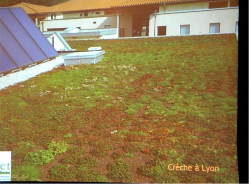 Example of a French Greenroof
