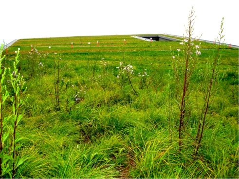 Vancouver Convention Centre Living Roof