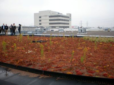 The Bayer Green Roof