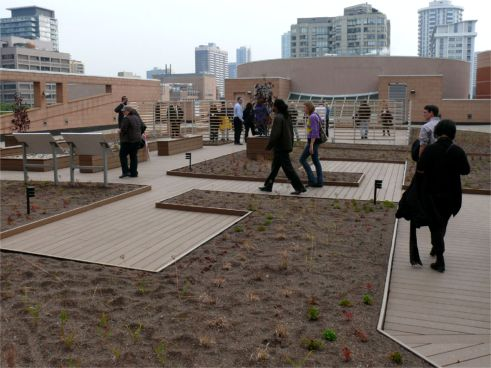 The Metro Toronto YMCA Greenroof, newly planted on October 21, 2009; Photo by Roland Appl