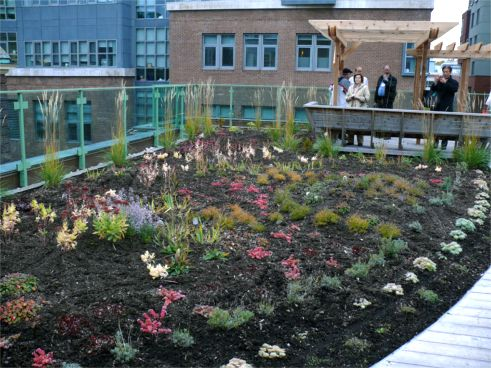 St. Hilda's Greenroof Garden; Photo of 10.21.09 by Roland Appl