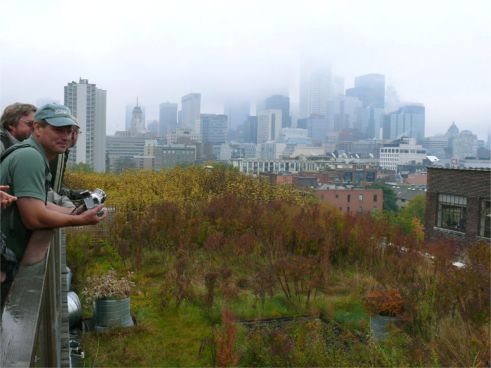 The Robertson Building at 215 Spadina Greenroof; Photo by Roland Appl
