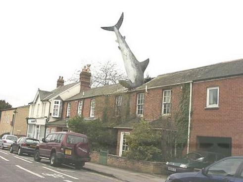 Roof Shark