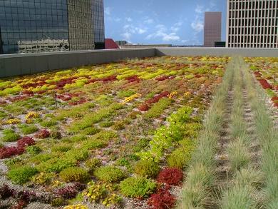 Ecoroof Portland Day 1 Greenroofs Com Sky Gardens Blog