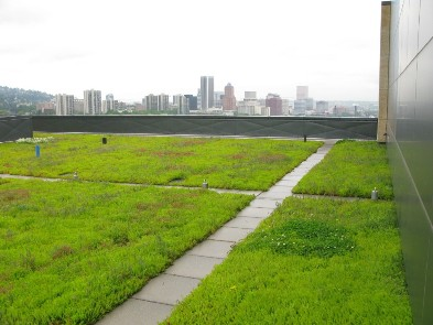OHSU, a Xero Flor Green Roof, in May 2008; Photo Courtesy BES