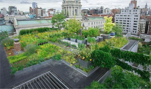 Nice Researcher Dustin Partridge Tracks The Insect Life On Roofs Throughout New  York To See If The Roofs Are Providing Food Sources For The Birds.
