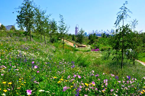 London Olympic Park Star Of The Show Greenroofs Com