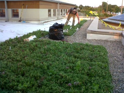 This Week In Review On Greenroofstv July 27 2012 Sky