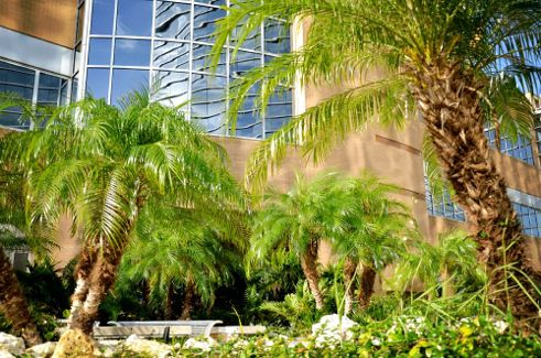 Orlando Health MD Anderson Cancer Center Labyrinth Vegetated Roof Garden; photo courtesy of Tremco, Inc.