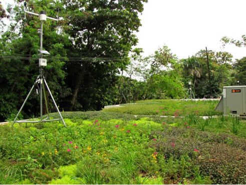 The International Institute of Tropical Forestry Greenroofs; Photo courtesy of Peter Philippi, rooflite