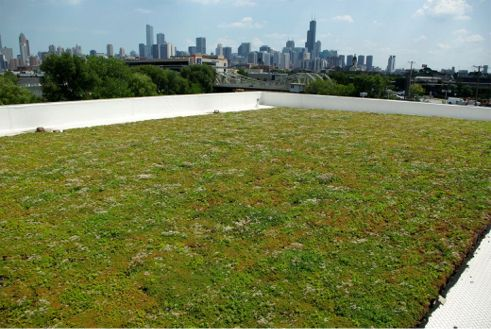 The McGrath Acura Car Dealership Greenroof all greened up in August, 2012; Photo Courtesy of Vegetal i.D.
