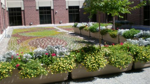 St. Lukes Magic Valley; Photo Courtesy of South Landscape Architecture
