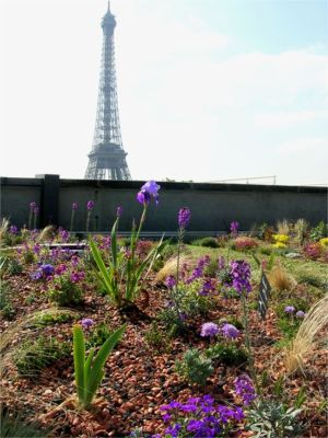 ParisGreenroof-stephane-prunieres