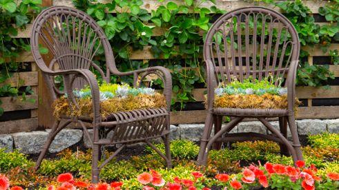 ChrisLong-plantedchairs-shutterstock_142640182