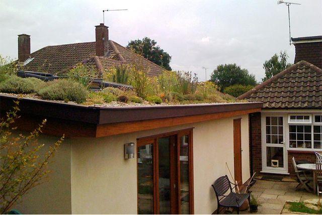 LisaPreston-green_roof2