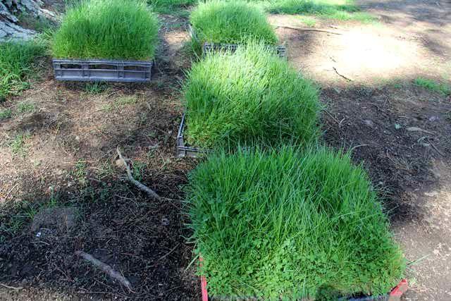 Hobbiton-LSV-102114-GrassesandClover