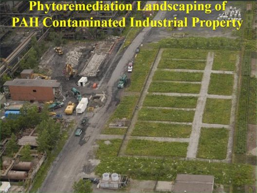 Panel Session Environmental Healing through Phytoremediation - Chapter One