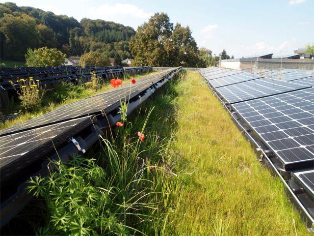 VS2015-StephanB-solar-greenroof
