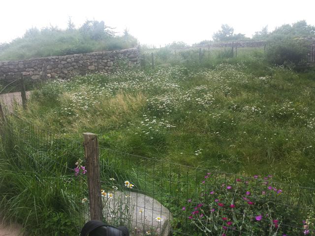 Irish-Hunger-Memorial-Green-roof