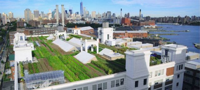 CitiesAlive2015-BrooklynGrangeFarm1