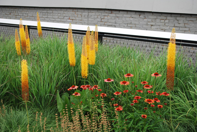 Project of the Week High Line