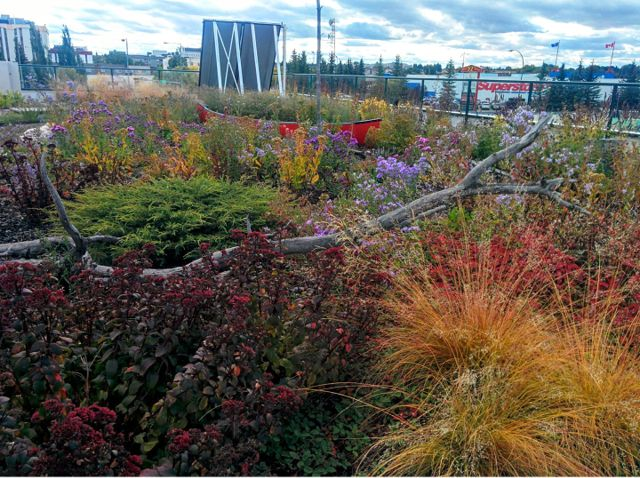 Project of the Week Berry Architecture Office Building Green Roof