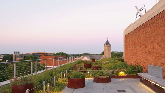 This is a picture of the variety of plants on the Pollak Building terrace.