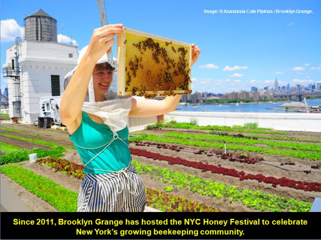 2015Top10-BrooklynGrangeNavyYard-HoneyBees