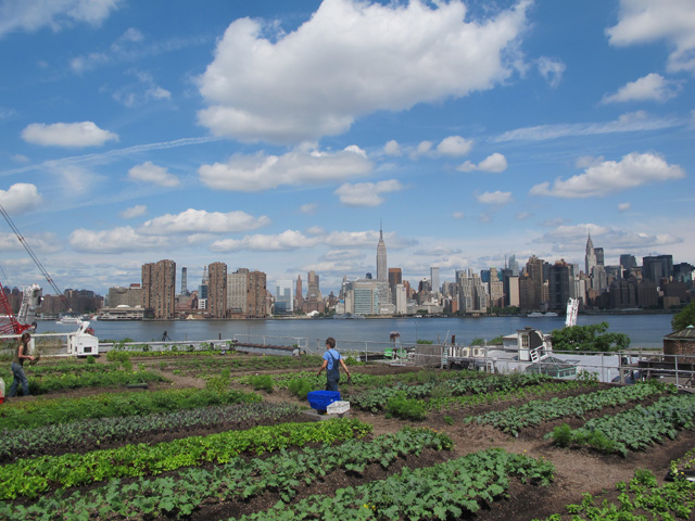 Eagle-Street-Rooftop-Farm-Annie-Novak-Rooftop-Growing-Guide