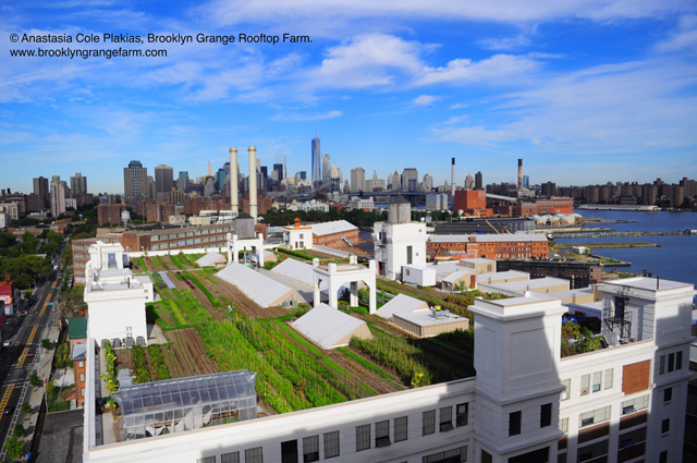 Project of the Week Brooklyn Grange Farm #2 Navy Yard