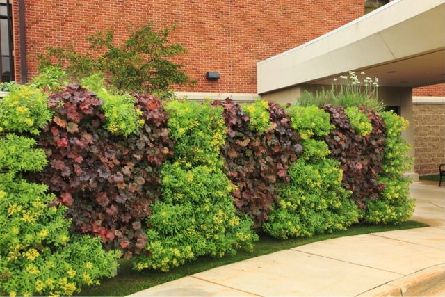 Project of the Week Spectrum Health Two-Sided Green Wall