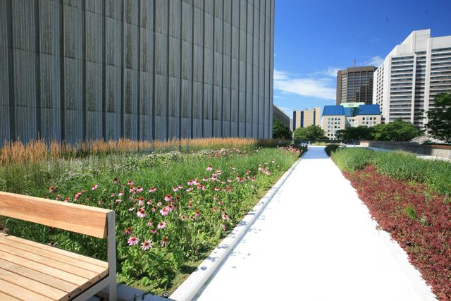 Toronto_City_Hall_Podium_green_roof_by_LiveRoof_July_2010-Wikimedia-GreenRoofGardener