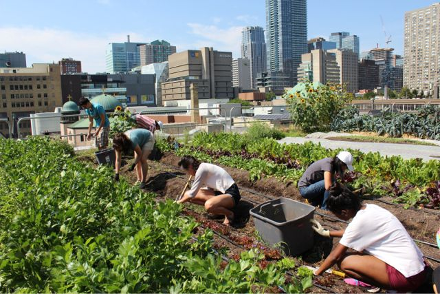 How to Make Organic Compost for Your Urban Farm