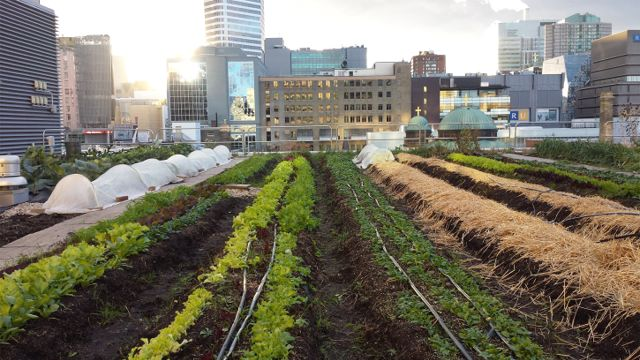 Project of the Week Ryerson Urban Farm formerly Rye's Homegrown