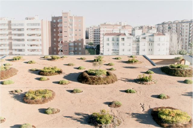 Caja Badajoz HQ Dehesa Landscape