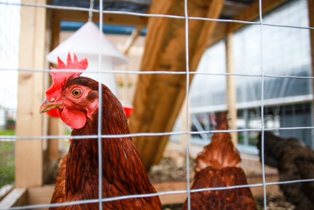 Greenroofs.com Project Week Food Roof Farm St Louis
