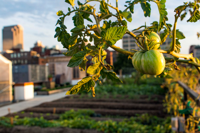 Project of the Week FOOD ROOF Farm