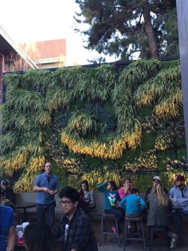Project of the Week Starbucks Living Wall Downtown Disney Anaheim