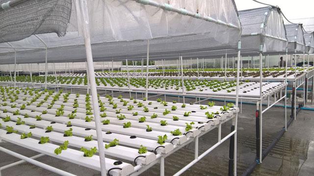 Project of the Week Anantara Riverside Bangkok Rooftop Hydroponic Farm