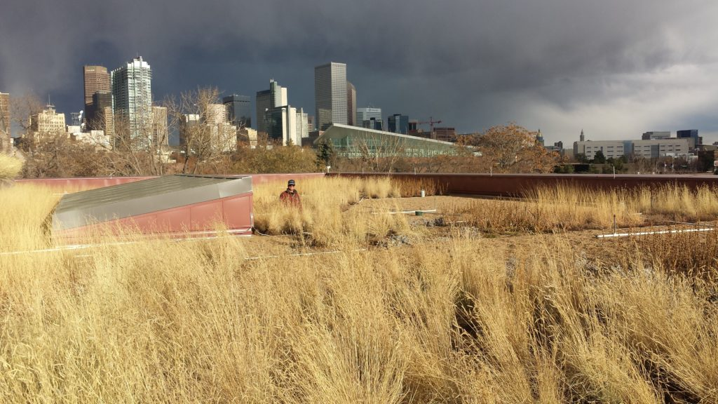 Support Denver Green Roof Initiative Brandon Rietheimer