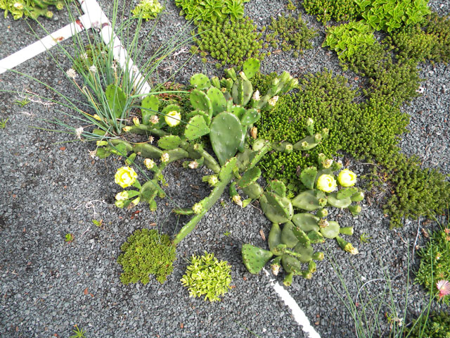 Greenroofs Com Project Of The Week For April 3 2017 Sam