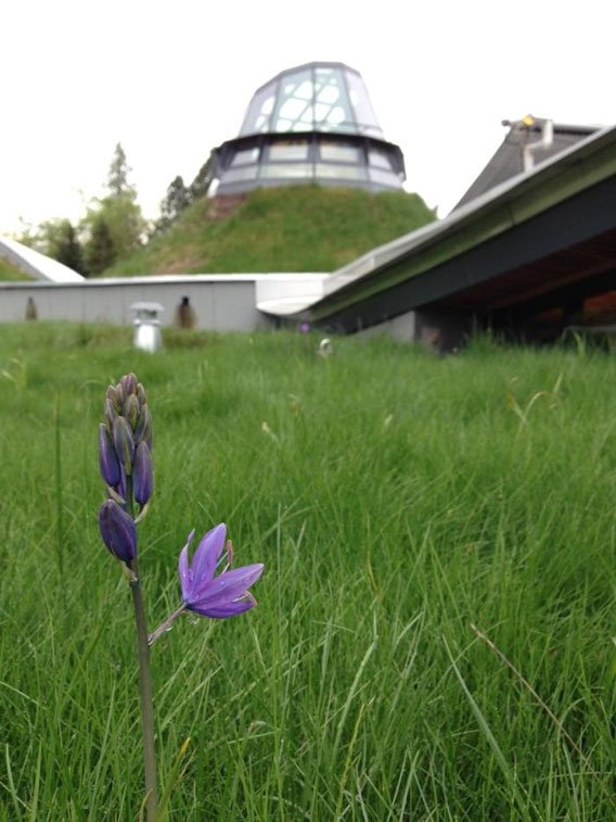 Greenroofs.com Project Week May 2017 VanDusen Botanical Garden Visitor Centre