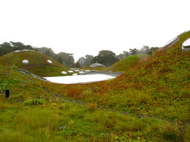 Greenroofs.com Project Week June 2017 California Academy Sciences Living Roof