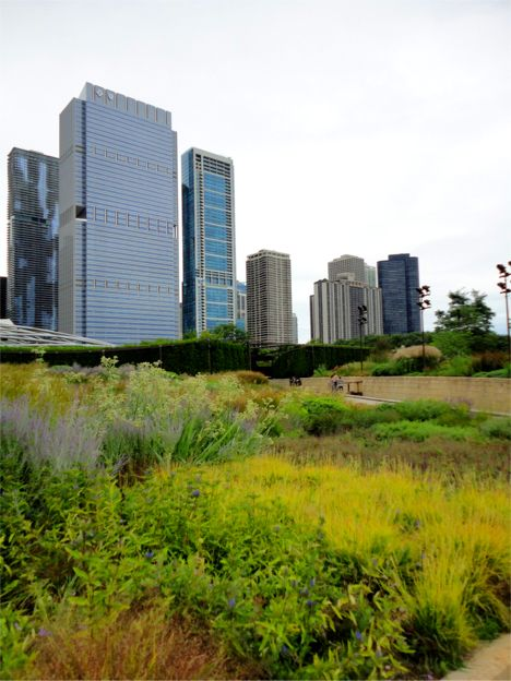 Greenroofs.com Project Week August 14 2017 Millennium Park Chicago