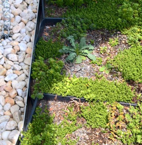 The Best Green Roof Solution Jörg Breuning Green Roof Patroller