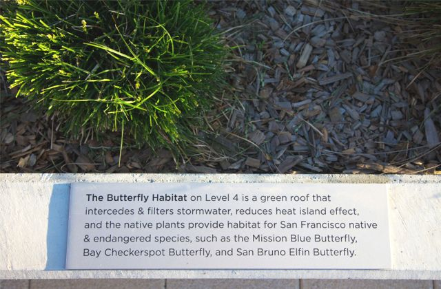 Greenroofs.com Project Week October 23 2017 38 Dolores San Francisco