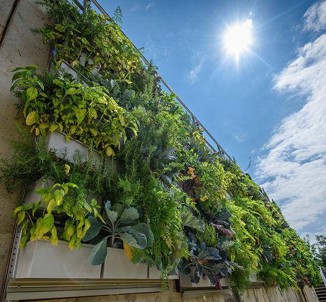 Phipps Conservatory Showcases Vertical Gardening on Display with LiveWall